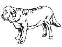 Decorative standing portrait of dog Spanish Mastiff vector illus Stock Photo