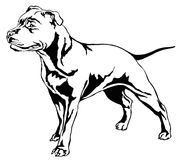 Decorative standing portrait of dog Staffordshire Bull Terrier v. Decorative portrait of standing in profile dog Staffordshire Bull Terrier, vector isolated Stock Image