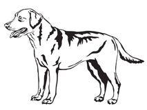 Decorative standing portrait of Labrador Retriever vector. Decorative portrait of standing in profile Labrador Retriever, vector isolated illustration in black Stock Image