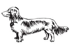 Free Decorative Standing Portrait Of Dog Long-haired Dachshund Vector Stock Photos - 100248653