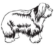 Decorative standing portrait of Old English Sheepdog vector illu. Decorative portrait of standing in profile Dog Old English Sheepdog, vector isolated Stock Photo