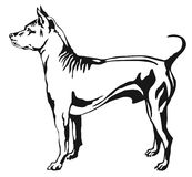 Decorative standing portrait of Thai Ridgeback vector   Royalty Free Stock Photos