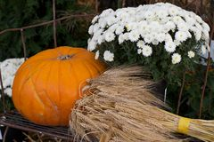 Decorative Still life of a Pumpkin, Flowers, and Barley, Whea Stock Photography