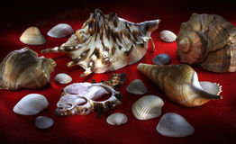 Decorative still life. With sea shells in vivid light rays royalty free stock photography