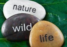 Decorative stones Stock Image