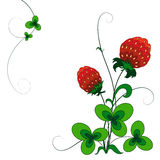 Decorative strawberry bush Stock Photos
