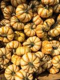 Decorative Striped Pumpkin Squash. Striped miniature decorative pumpkin squash Stock Photo