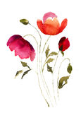 Decorative summer flowers. Watercolor illustration Stock Image