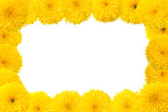 Decorative sunflower frame Royalty Free Stock Images