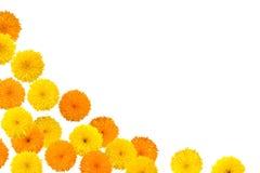 Decorative sunflower frame. Isolated on white background Royalty Free Stock Images