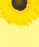 Decorative sunflower graphic Stock Image