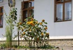Decorative sunflower Royalty Free Stock Photo
