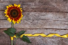 Decorative sunflower yellow flower with a beautiful ribbon Stock Images