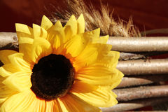 Decorative sunflowers Stock Images