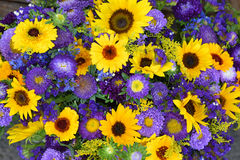 Decorative sunflowers and blue asters Royalty Free Stock Image