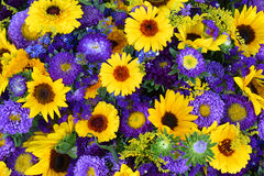 Decorative sunflowers and blue asters Royalty Free Stock Photography