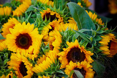 Decorative Sunflowers bunch Royalty Free Stock Photography