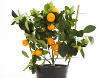 Decorative tangerine Royalty Free Stock Photography