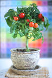 Decorative tree of cherry tomatoes Royalty Free Stock Photography