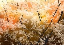 Decorative tree concept Stock Photography