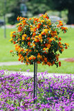 Decorative tree in flowers Stock Photos