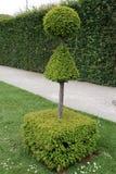 Decorative tree in a garden Stock Photo