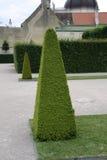 Decorative tree in a garden Stock Photos