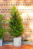 Decorative tree in house or work place Royalty Free Stock Image
