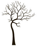 Decorative tree without leaves Stock Photos