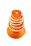 Decorative tree from orange slices on a white background Royalty Free Stock Image