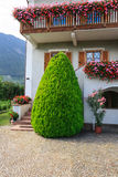Decorative tree outside a house Royalty Free Stock Photo