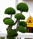 Decorative tree Stock Photo