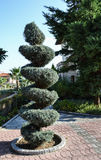 Decorative tree trimmed in the form of a spiral.  Stock Image