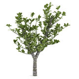 Decorative tree Royalty Free Stock Images