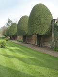 Decorative trees. Topiary at English country house Royalty Free Stock Photography