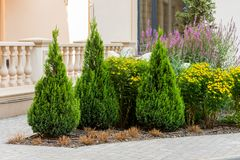 Decorative trees and bushes in the design of the flowerbeds. Of the landscape in the city royalty free stock photography