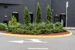 Decorative trees and bushes in the design of the flowerbeds. Of the landscape in the city royalty free stock photos