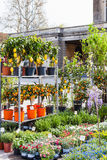 Decorative trees on garden market in Padua Royalty Free Stock Photo