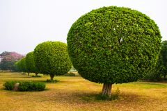 Decorative trees in the park of Lotus Temple. New Delhi, India royalty free stock photo