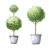 Decorative trees in pots. Royalty Free Stock Photos