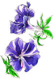 Decorative tropical bindweed flower Stock Photos