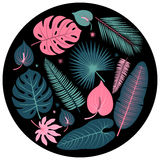 Decorative tropical plant leaves vector collection Stock Photos