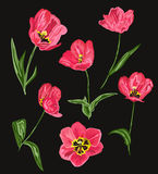 Decorative tulip flowers set Stock Images