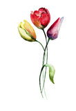 Decorative Tulips flowers.  watercolour illustration Royalty Free Stock Images