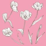 Decorative tulips set Royalty Free Stock Image
