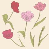 Decorative tulips set Stock Photo