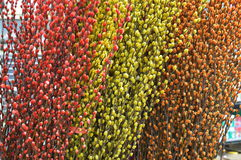 Decorative Twigs Plants Royalty Free Stock Photos