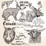 Decorative vector elements and animals in vintage style Stock Images