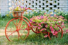 Decorative Vintage Model Old Bicycle Equipped Basket Flowers Garden. Photo. Royalty Free Stock Photography