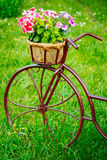 Decorative Vintage Model Old Bicycle Equipped Stock Images